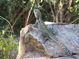 australian national botanic gardens archives trevor u0027s birding
