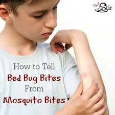 bed bug vs spider bite mosquito bites vs bed bug bites how to tell the difference bed