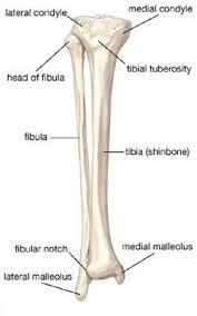 Knee Bony Anatomy Bone Anatomy Anatomy Pinterest Anatomy Learning English And