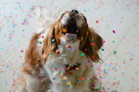 Wallpaper Dogs Dogs With Confetti Wallpaper Free Download