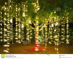outdoor tree lights for summer holiday lights in tree summer night stock photo image of festive