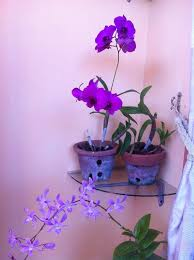 Orchid Plants 2 Easy Ways To Grow Orchids With Pictures Wikihow