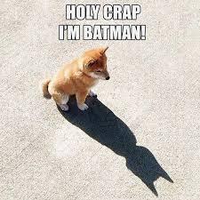 Best 25 Spider Meme Ideas - best 25 funny batman memes ideas on pinterest funny monday