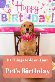 Dog Going Blind What To Do Best 25 Dog Birthday Parties Ideas On Pinterest Dog Parties