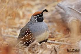 Arizona wildlife tours images Wildlife photography tours workshops jeff parker explore in jpg