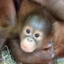 zoos face off in u0027cute animal tweet off u0027
