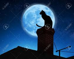 Halloween Black Cat Silhouette Cat Silhouette Stock Photos Royalty Free Cat Silhouette Images