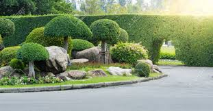 gardening and landscaping with decorative trees and plants stock