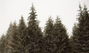 christmas tree farms in southeast michigan metro parent