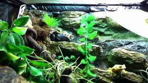 my new eyed tree frog setup