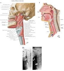 head archives page 11 of 11 human anatomy chart