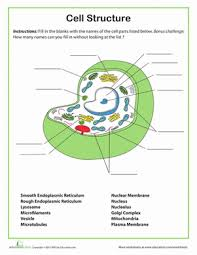 cell structure cell structure worksheets and middle