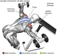 Bench Exercises With Dumbbells Best 25 Rear Delt Exercises Ideas On Pinterest Shoulder Day