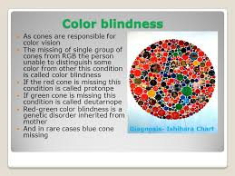 Incidence Of Color Blindness Retina And Retinal Vascular Diseases Ppt Download