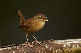 migrating birds boycott north carolina u2013 full frontal u2013 medium
