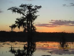 Louisiana wildlife tours images Louisiana tour 2012 merlin wildlife tours jpg