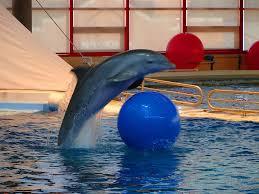 free at last national aquarium u0027s sea change on dolphin policy
