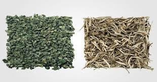 Teh Putih ini beda teh putih dan hijau okezone lifestyle