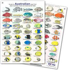 dive logs com fish identification card guide to australia fish