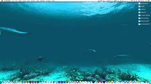 dolphin animated wallpaper for mac 4k displays youtube