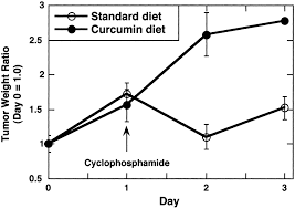 dietary curcumin inhibits chemotherapy induced apoptosis in models