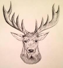 25 unique wild animals drawing ideas on pinterest animal design