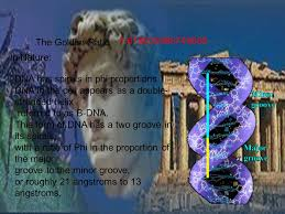 golden ratio dna spiral the golden ratio what is it also known as phi rhymes with fly