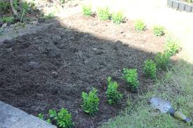 Coffee Grounds In Vegetable Garden by Making An Organic Vegetable Garden With Children The Imagination