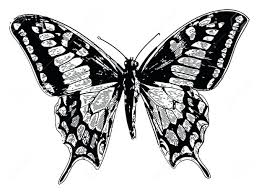 other photos to butterfly wings designs 20 exciting wing