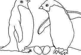 penguin coloring paperblog