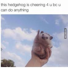 Meme You Can Do It - 25 best memes about hedgehog you can do it hedgehog you can