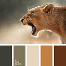 beige beige brown hues color combinations color lion