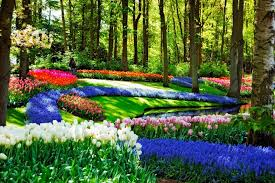 best places around the world to see beautiful flowers silverkris