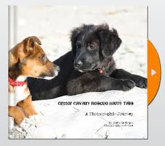 dog coffee table books happy tails coffee table book ccr fundraiser photography and more