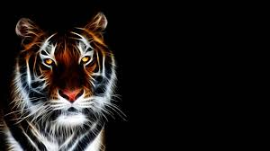 tiger wallpapers 37 high quality tiger wallpapers full hd tiger