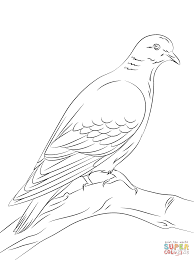 stock dove coloring page free printable coloring pages