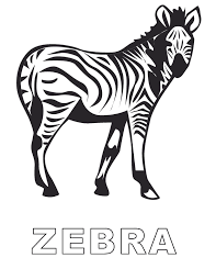 zebra pictures kids coloring