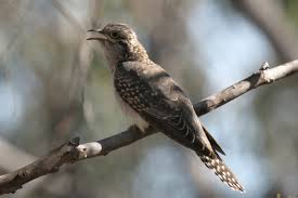 top 40 bird songs birds in backyards