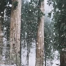 tree sleigh rides santa