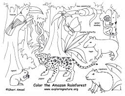 rainforest color pictures rainforest amazon coloring page with