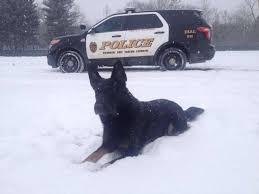 belgian sheepdog massachusetts newtown u0027s police dog dies of cancer newstimes
