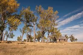 montana native plant society dennis lingohr u2013 eastern montana prairie landsnorkel com