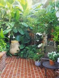Small Tropical Backyard Ideas Small Tropical Plants For The Garden Cori U0026matt Garden