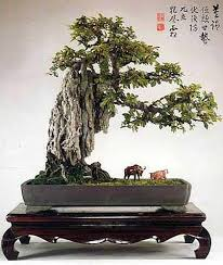 penjing are wrongfully called chinese bonsai