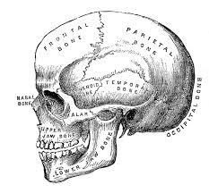 vintage halloween wallpaper vintage halloween clip art anatomy skull printable id 185172