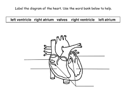 hd wallpapers circulatory system worksheets for kids pdf hcehd cf