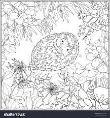 wildlife coloring book coloring page lovely hedgehog coloring book stock vector 466371368
