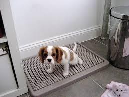 amazon com ugodog indoor dog potty pet floor protection trays