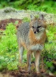 New Hampshire wild animals images 31 best new england wildlife images wildlife jpg