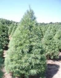 the tree types in northwest arkansas
